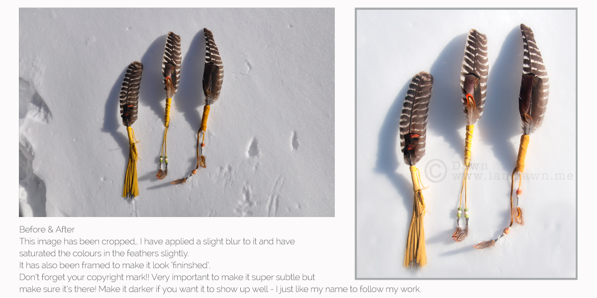 feathers, pass the feather, photography tips