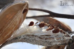 Jill Shimizu, artist, aboriginal art, pass the feather, aboriginal arts collective of canada, photography