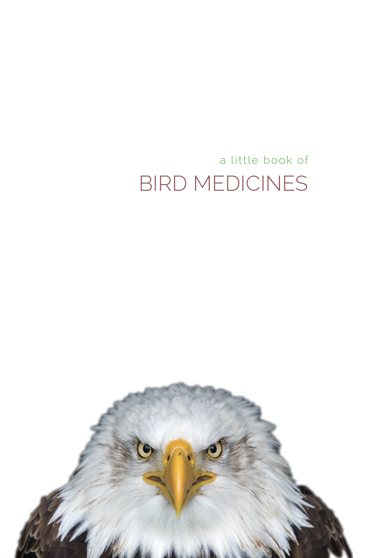 a little book of bird medicines, pass the feather, fundraising, smudge feathers, smudge
