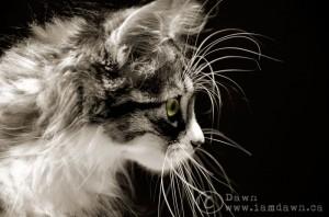 cat , i am dawn