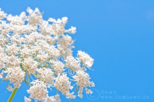 flowerinthesky,i am dawn